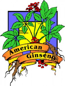 diabetes and ginseng